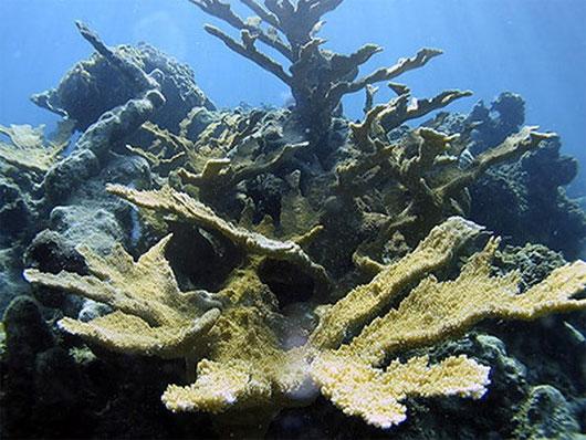 Gần 1/3 diện tích rạn san hô của Indonesia đã bị phá hủy