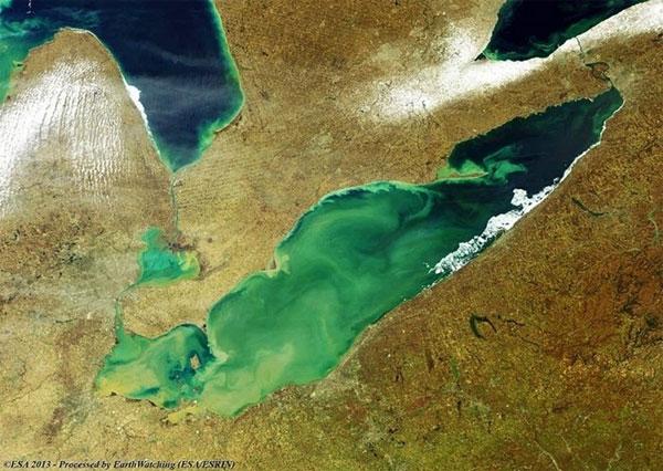 Tảo độc nở rực rỡ trên hồ Erie