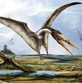Phát hiện hóa thạch thằn lằn bay thời tiền sử