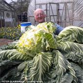 Cận cảnh cây súp lơ lớn nhất thế giới