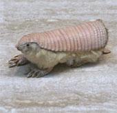 Những loài động vật kỳ lạ nhất trên thế giới