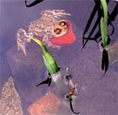 Cảnh ếch cưỡi cá vàng hiếm thấy