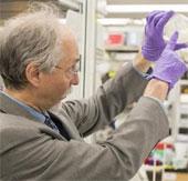 Lần đầu tiên tổng hợp được nhiễm sắc thể nấm men