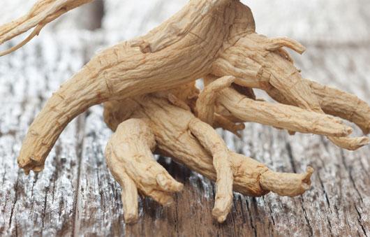 Chiết xuất nhân sâm giúp tăng đề kháng, chống nhiều chủng virus cúm