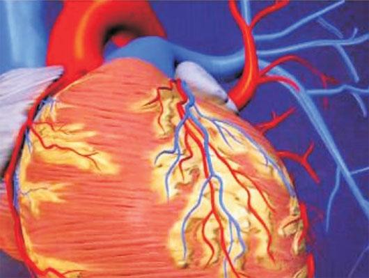Đột phá mới trong phục hồi cơ tim tê liệt sau cơn đau tim
