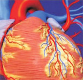 Sức khỏe đời sống-Đột phá mới trong phục hồi cơ tim tê liệt sau cơn đau tim