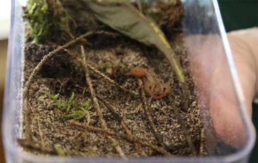 Cả nhà ga náo loạn vì sự xuất hiện của con bọ cạp lạ