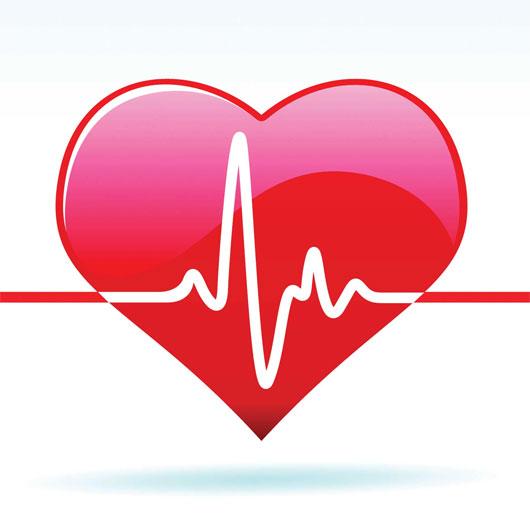 Vì sao cơ tim là cơ bắp khỏe nhất?