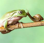 Ảnh đẹp: Ốc sên hôn ếch xanh