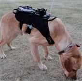 Chó cứu hộ mặc áo công nghệ cao