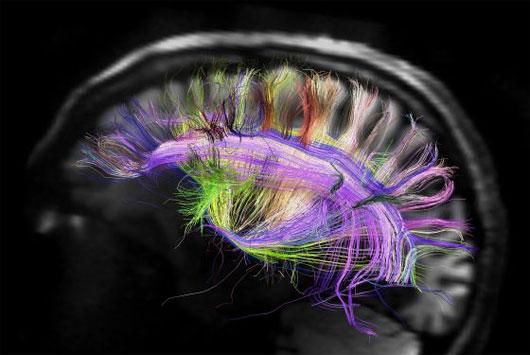 Não phụ nữ phục hồi nhanh hơn đàn ông