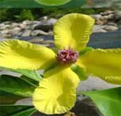 Công bố 3 loài thực vật mới ở Việt Nam