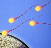Tạo ra tinh trùng từ tế bào da