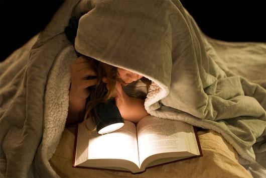 Những cú đêm có sự tập trung rất cao và kéo dài lâu.