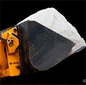 Cây phản ứng lại với muối giống con người phản ứng với đau đớn