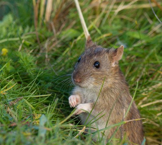 Phát hiện đáng ngạc nhiên: Số lượng loài không hề suy giảm