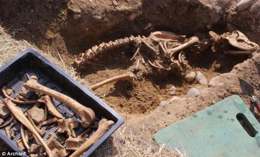 Phát hiện hóa thạch xương chó ngao ma huyền thoại cao hơn 2m
