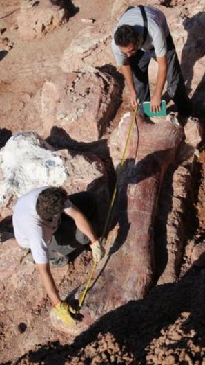 Phát hiện hóa thạch loài khủng long cao ngang tòa nhà 7 tầng