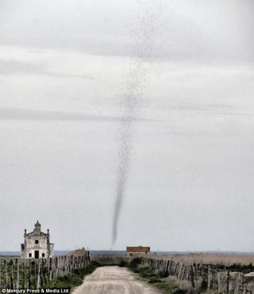 Hoảng hồn cột lốc xoáy châu chấu cao gần 305m