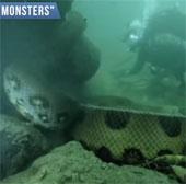 """Đối mặt với """"quái vật"""" sông khổng lồ dài 17m"""