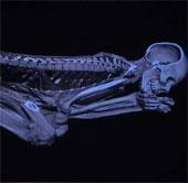Giải mã xác ướp Ai Cập nhờ máy chụp cắt lớp CT mới