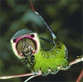 Nghệ thuật ngụy trang của sâu bướm