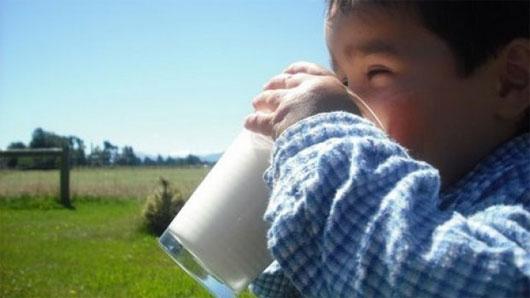 Lợi thế của sữa dê so với sữa bò