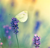 Bướm và chuồn chuồn sáng màu phát triển mạnh do Châu Âu ấm