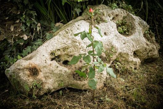 """Sau một tuần """"tôi luyện"""", giờ là lúc bạn có thể đem trồng trong vườn và tận hưởng những nụ hoa ngọt ngào dần chớm nở..."""