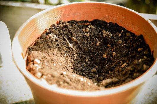 Dùng thìa sạch đào một hố đất nhỏ trong chậu để đặt củ khoai tây.