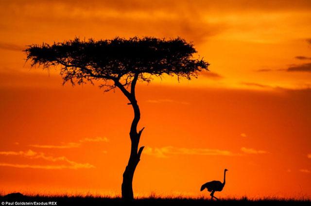 Chùm ảnh động vật tuyệt đẹp buổi bình minh và lúc chiều tà