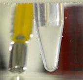 Phát triển loại gel hỗ trợ tái tạo xương
