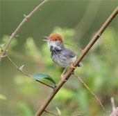 Phát hiện thêm nhiều loài mới vùng hạ lưu Mê Kông