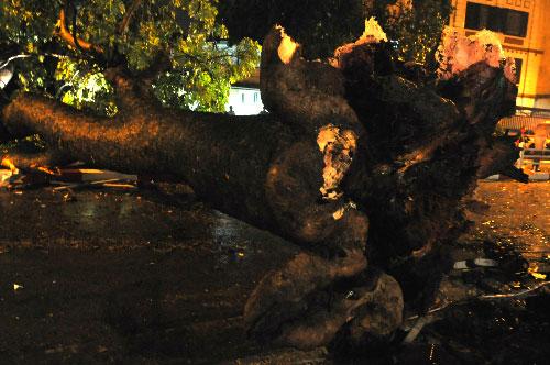 Mưa giông tại Hà Nội quật đổ nhiều cây xanh, một người chết