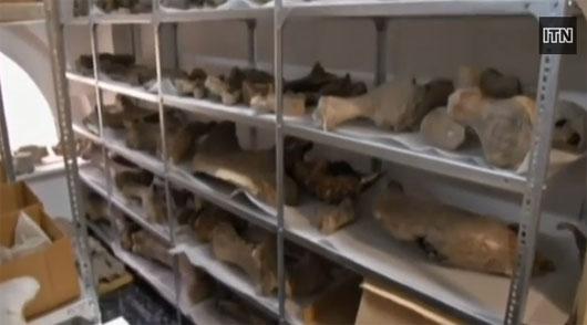 Video: Nghĩa địa ngư long ở Chile