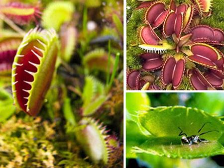 Những loài thực vật kỳ lạ nhất thế giới