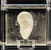 Dùng máy in 3D tái tạo tai Van Gogh bằng mô người