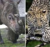 Viễn cảnh tuyệt chủng hàng loạt như khủng long