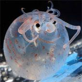 Những sinh vật biển kỳ lạ, dễ thương