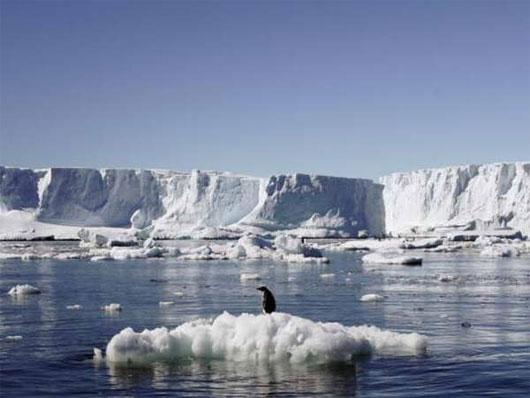 Chim cánh cụt đối mặt với nguy cơ tuyệt chủng