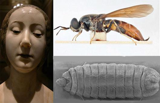 Bí ẩn về ấu trùng ruồi trong di cốt công chúa Ý