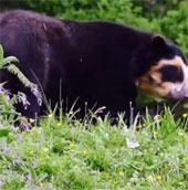 Gấu làm quen với bạn trong vườn thú mới