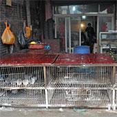 Virus H7N9 có thể tấn công Việt Nam và một số nước châu Á