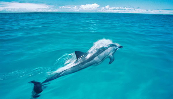 Mỹ công bố lập khu bảo tồn biển lớn nhất thế giới