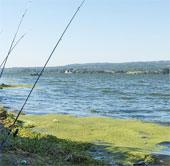 Nước ngọt tại châu Âu bị ô nhiễm hóa học tệ hơn so với ước đoán