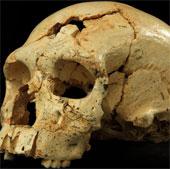 Phát hiện hộp sọ người niên đại 430.000 tuổi
