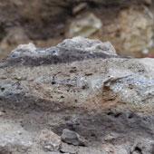 Phân tích hóa thạch phân của người cổ đại