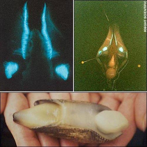 Cận cảnh vẻ kỳ ảo của những sinh vật tự phát sáng