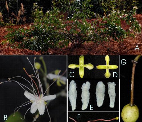 Phát hiện thực vật mới ở Đắk Nông