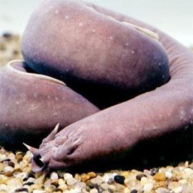 Những khả năng khó tin của các loài sinh vật dưới nước